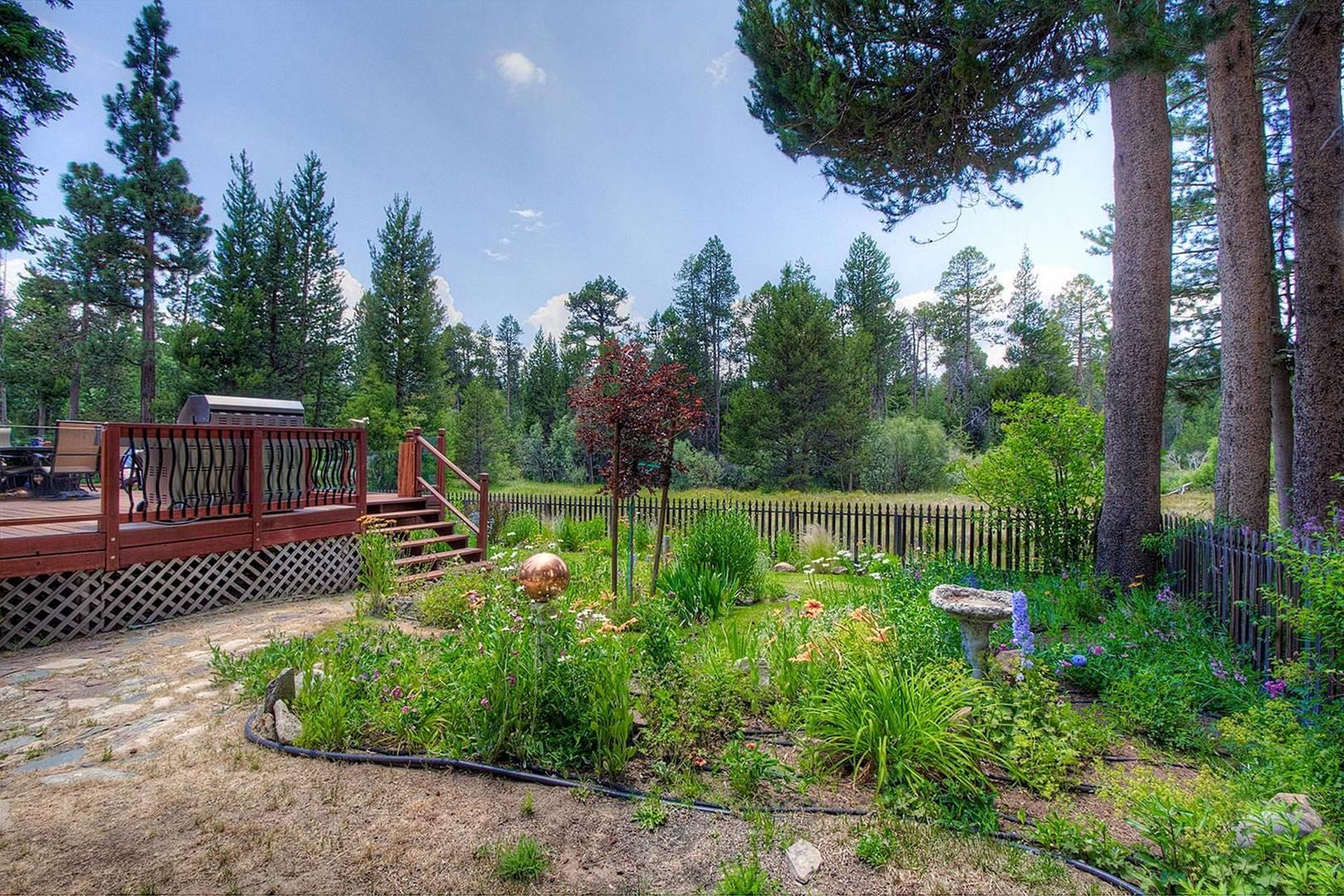 cyh1282 backyard
